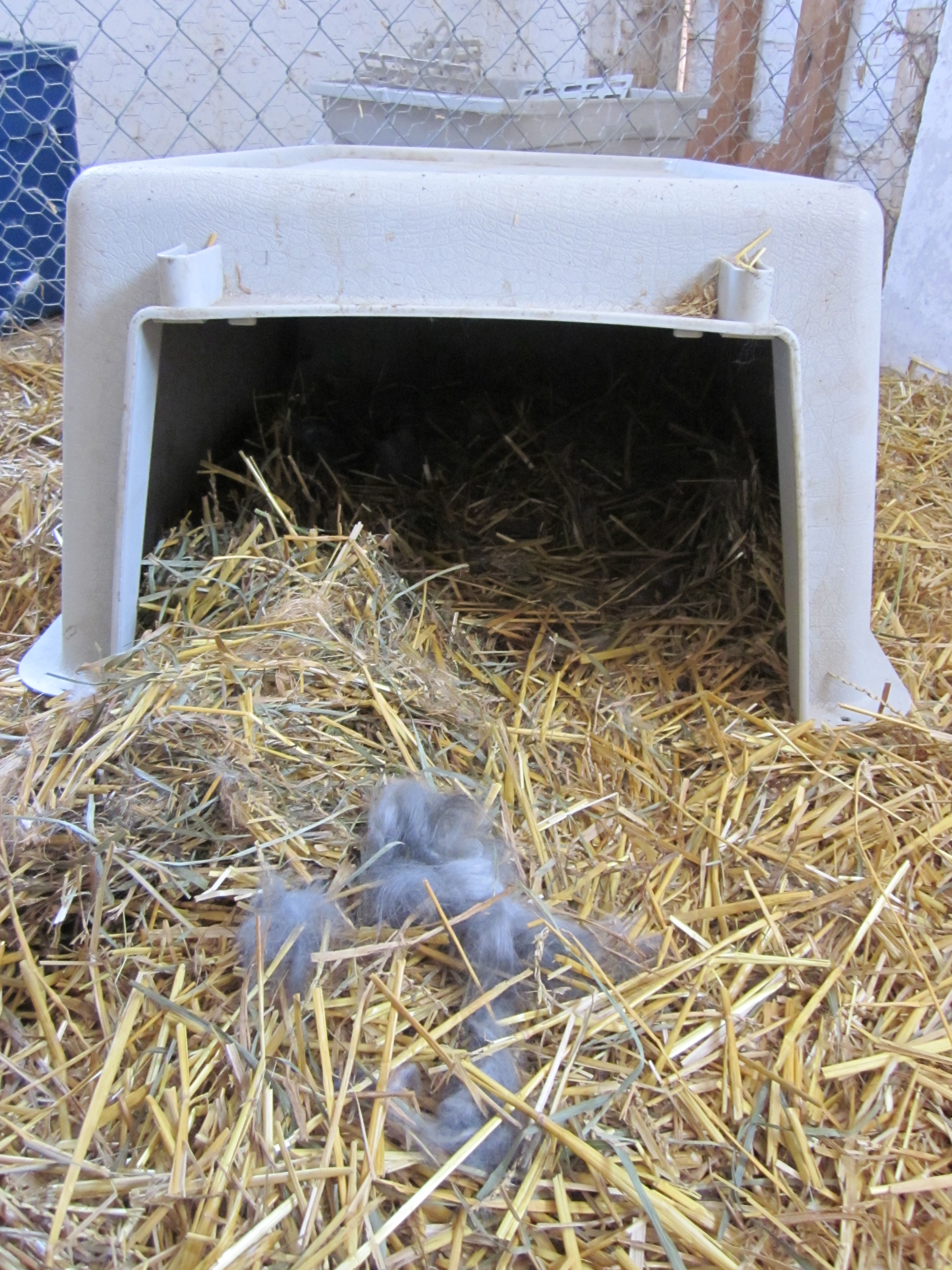 Colony Raised Rabbits Emancipation Acres