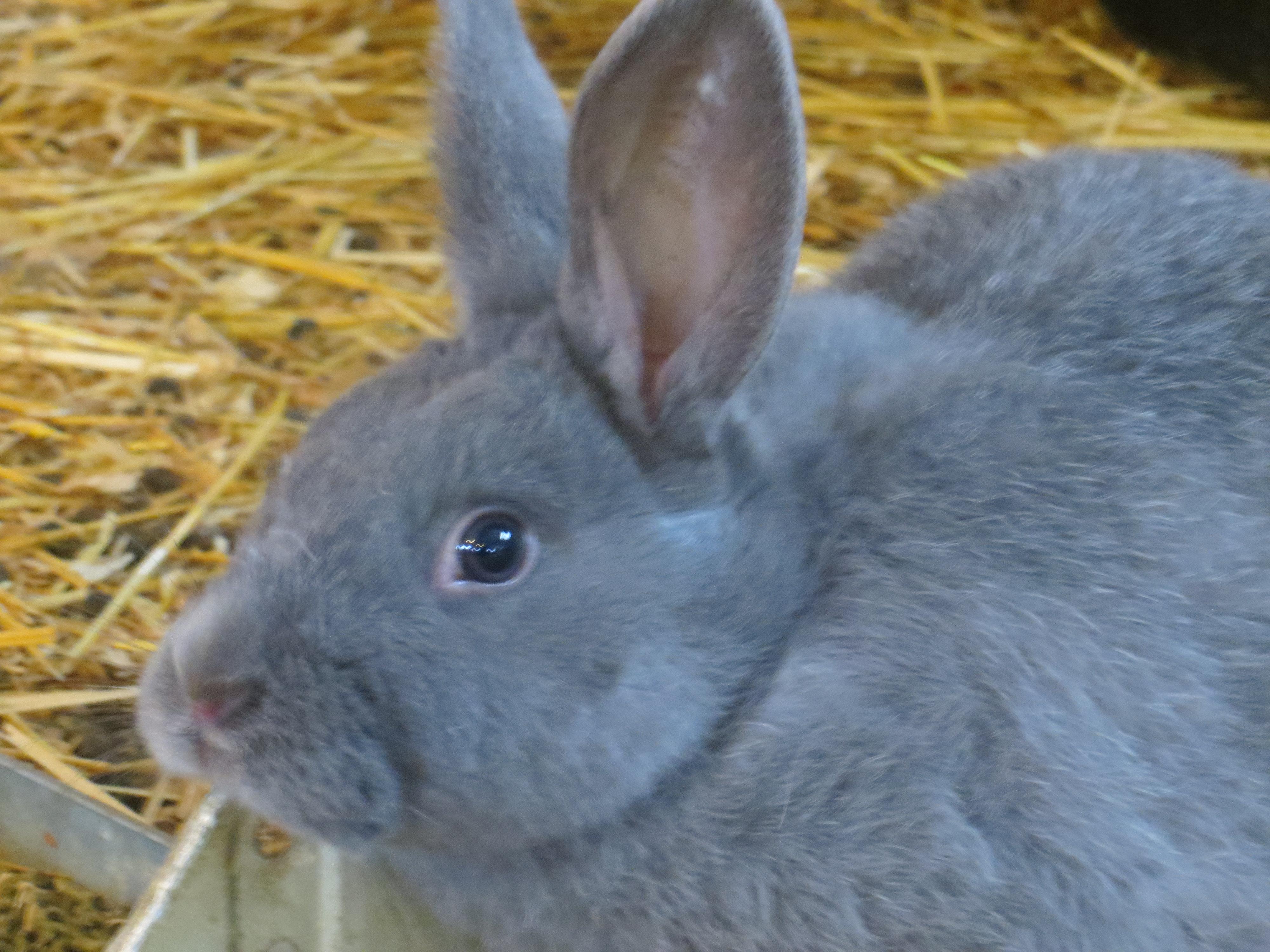 Silver Fox Rabbit Colony | Emancipation Acres